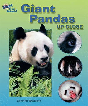 Picture of Giant Pandas Up Close