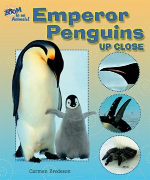 Picture of Emperor Penguins Up Close