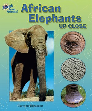 Picture of African Elephants Up Close