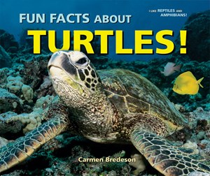 Picture of Fun Facts About Turtles!