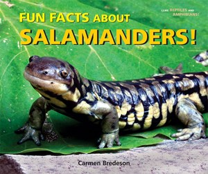 Picture of Fun Facts About Salamanders!