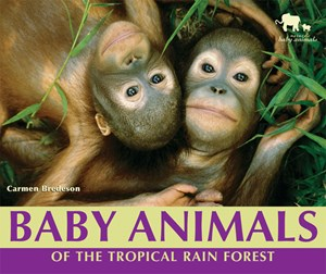 Picture of Baby Animals of the Tropical Rain Forest