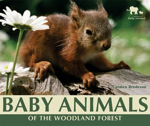 Picture of Baby Animals of the Woodland Forest