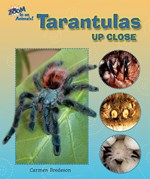 "<h2><a href=""../books/Tarantulas_Up_Close/3887"">Tarantulas Up Close</a></h2>"