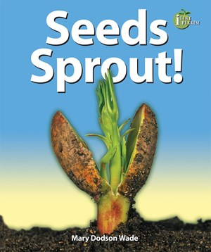 Picture of Seeds Sprout!