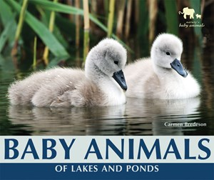 Picture of Baby Animals of Lakes and Ponds