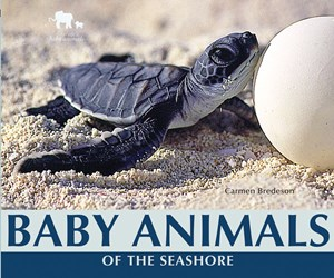 Picture of Baby Animals of the Seashore