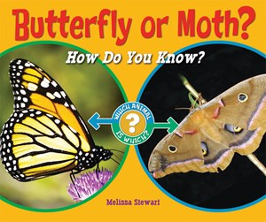 Picture of Butterfly or Moth?: How Do You Know?