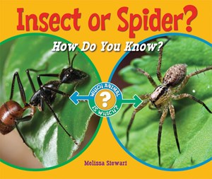 Picture of Insect or Spider?: How Do You Know?