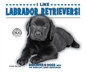 Picture of I Like Labrador Retrievers!