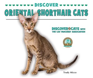 Picture of Discover Oriental Shorthair Cats