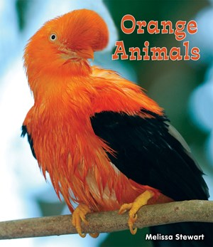 Picture of Orange Animals