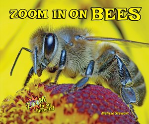 Picture of Zoom In on Bees