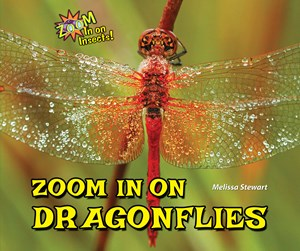 Picture of Zoom In on Dragonflies: