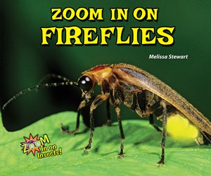 Picture of Zoom In on Fireflies: