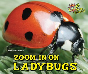 Picture of Zoom In on Ladybugs: