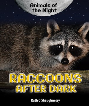 Picture of Raccoons After Dark
