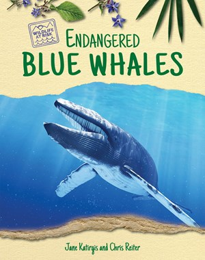 Picture of Endangered Blue Whales