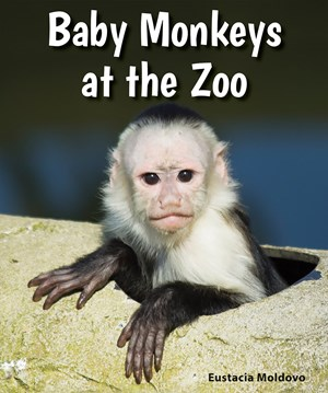 Picture of Baby Monkeys at the Zoo