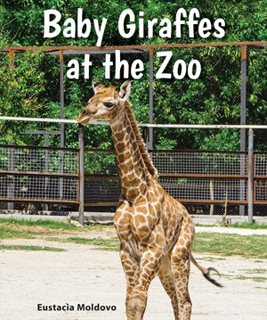 Picture of Baby Giraffes at the Zoo