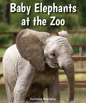 Picture of Baby Elephants at the Zoo