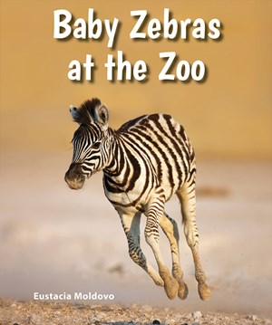 Picture of Baby Zebras at the Zoo