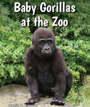 Picture of Baby Gorillas at the Zoo: