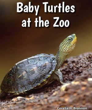 Picture of Baby Turtles at the Zoo:
