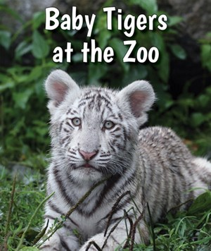 Picture of Baby Tigers at the Zoo: