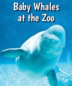 Picture of Baby Whales at the Zoo: