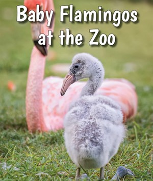 Picture of Baby Flamingos at the Zoo: