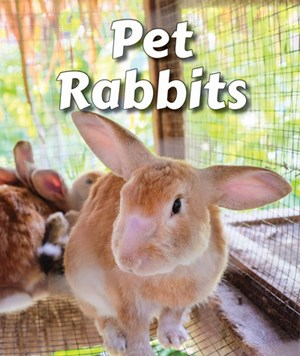 Picture of Pet Rabbits: