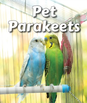 Picture of Pet Parakeets: