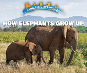 Picture of How Elephants Grow Up: