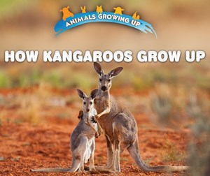 Picture of How Kangaroos Grow Up: