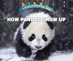 Picture of How Pandas Grow Up: