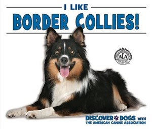Picture of I Like Border Collies!: