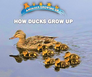 Picture of How Ducks Grow Up: