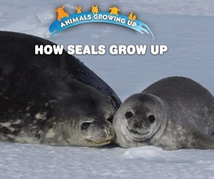Picture of How Seals Grow Up: