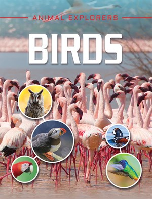 Picture of Birds: