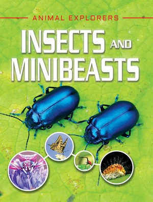 Picture of Insects and Minibeasts: