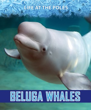 Picture of Beluga Whales: