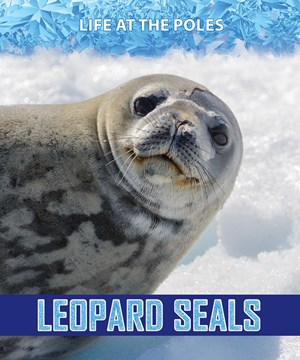 Picture of Leopard Seals: