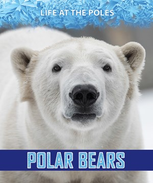 Picture of Polar Bears: