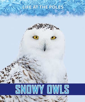 Picture of Snowy Owls:
