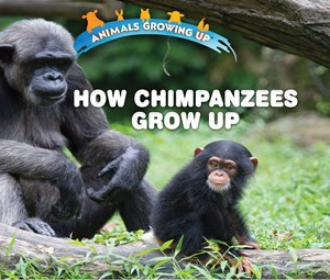 Picture of How Chimpanzees Grow Up: