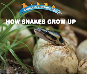 Picture of How Snakes Grow Up: