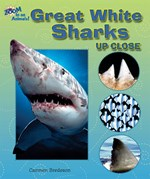 "<h2><a href=""../Great_White_Sharks_Up_Close/3877"">Great White Sharks Up Close</a></h2>"