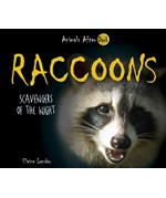 "<h2><a href=""../Raccoons/561"">Raccoons: <i>Scavengers of the Night</i></a></h2>"