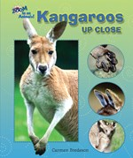 "<h2><a href=""../Kangaroos_Up_Close/3880"">Kangaroos Up Close</a></h2>"